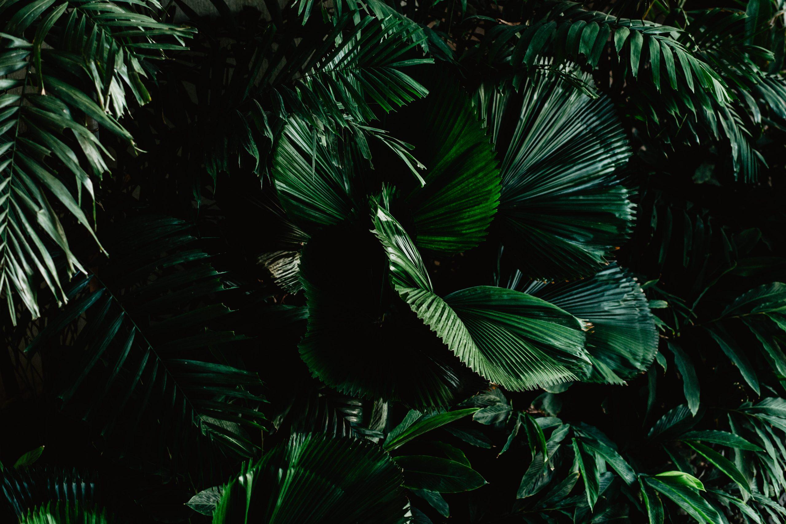 Hey.u Creative Hotel Fotografie Jungle